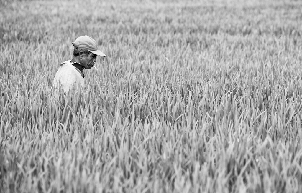 Balinese-rice-farmer.jpg